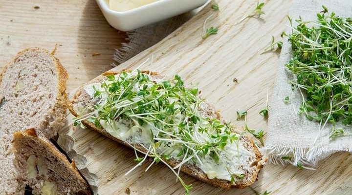 Cress and Carbohydrates